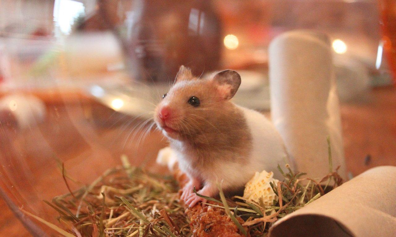 Sind Hamsterkugeln Tierquälerei?