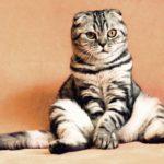 Eine gut gepflegte und umsorgte Hauskatze erreicht im Durchschnitt ein Alter von 16 bis 18 Jahren. Die derzeit älteste Katze, ein Siam-Kater aus Texas, ist laut Guinness-Buch der Rekorde 30 Jahre al