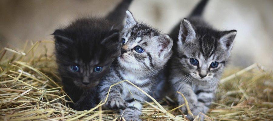 Katzen milch geben