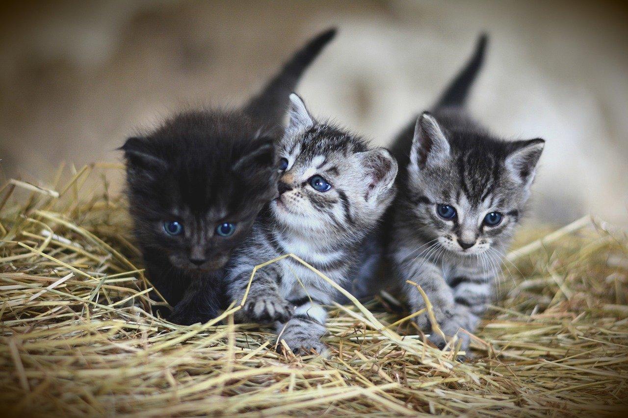 Darf man einer 3 Monate alten Katze Milch geben?